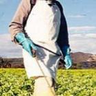 AGROTÓXICOS: NOVOS DADOS DO CENSO AGROPECUÁRIO